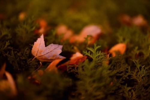 Fall pic spann